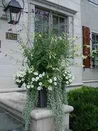 white nicotiana verbena bonariensis white petunias and