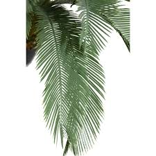 Laura Ashley Home Design Reviews Indoor Plants Wayfair Tall Palm Tree In Planter Loversiq