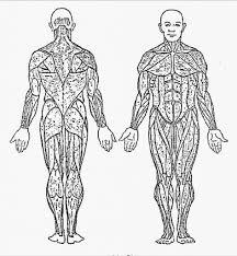 100 ideas human anatomy coloring pages on gerardduchemann com