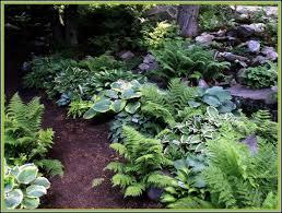shade garden ferns and hostas gardens ideas vermont flower pre