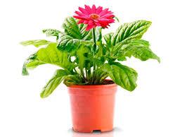 Indoor Plants Low Light Hgtv by Indoor Plants Low Light Clean Air