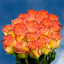 yellow roses with tips yellow roses with orange tips for delivery global