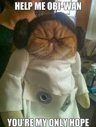 Princess Leia Meme - funny princess leia star wars help me obi wan meme quote cats