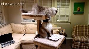 cat trees for large cats cats receive cat power tower modern cat