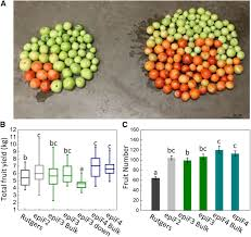 muts homolog1 derived epigenetic breeding potential in tomato