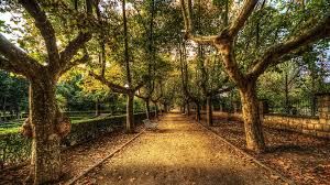 forests walkway trees lovely benches stroll wall colorful