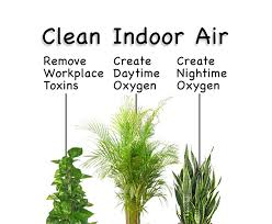 best plants for air quality best plants for indoor air quality home furniture design
