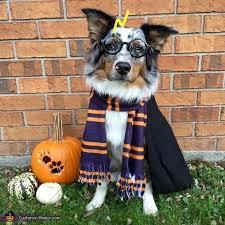 Halloween Costumes Dogs 25 Harry Potter Dog Costume Ideas Harry
