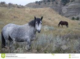 wild horse horses outside grazing stock photo image 70159544