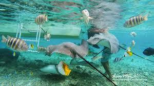 bora bora swimming with sharks missvacation