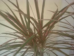 house plant identification by leaf with concept picture 134146