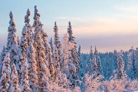 Alaska Forest images The boreal forest of alaska jpg