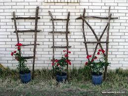garden diary wenderfloniations