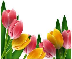 wallpaper bunga tulip bunga tulip free vector download 166 free vector for commercial