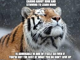 Tiger Meme - i propose a new wholesome meme positive vibes tiger album on imgur
