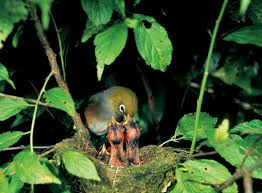 native plants in new zealand suburban birds new zealand geographic