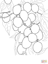 lychee fruit drawing lychees on tree coloring page free printable coloring pages
