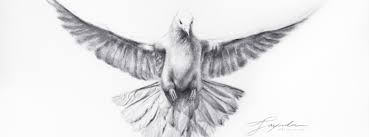 dove totem drawing academy drawing academy