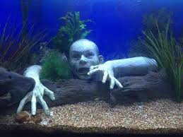 10 best fish images on fish aquariums aquarium ideas