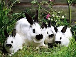 Cool Pets Rabbit Hutch 76 Best Rabbits Images On Pinterest Raising Rabbits Meat