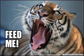 Tiger Meme - tiger weknowmemes generator