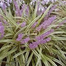 p r landscaping inc landscape plants l z