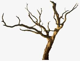 withered trunks and branches tree rattan vine branches png image