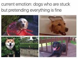 Frowning Dog Meme - current emotion dogs who are stuck but pretending everything is