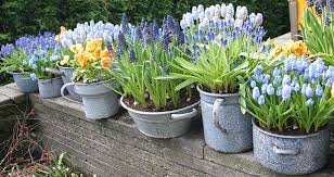 potted flowers potted flowers 195 porch advice