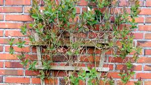 wall with climbing plant barbaras hd wallpapers