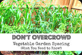 Gardening For Beginners Vegetables by Vegetable Gardening For Beginners Garden Layout Ohio Post Soil