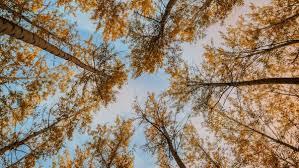 wallpaper trees autumn bottom view hd picture image