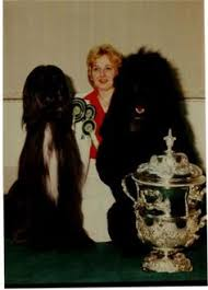 affenpinscher crufts 2014 ricky the standard poodle best in show crufts 2014 poodles u003c3
