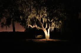 Moonlighting Landscape Lighting Oak Tree Lighting Landscape Charleston By Moonlighting