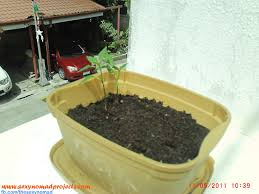 plants that don t need sunlight to grow nomad u0027s projects how to grow peppers sili from seeds