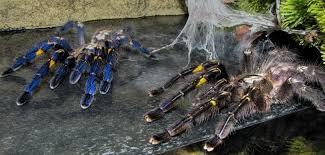 tarantula den