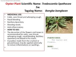 philippine herbal