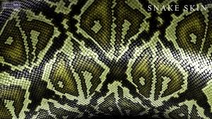 a green snake wallpapers snake wallpapers u2013 animal spot