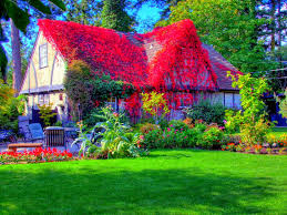 modern beautiful cottage house grass style hd pictures hd