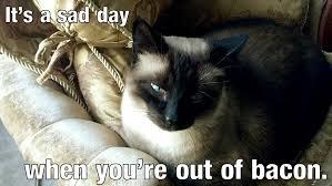 Sassy Cat Meme - ming ming ming memes