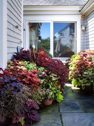 10 best images about ornamental sweet potato vines on