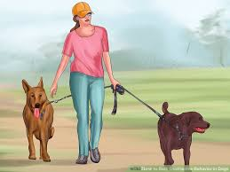 Can You Bury A Dog In Your Backyard 5 Ways To Stop Destructive Behavior In Dogs Wikihow
