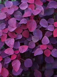 Colors That Match With Purple The 25 Best Magenta Ideas On Pinterest Jewel Colors Vibrant