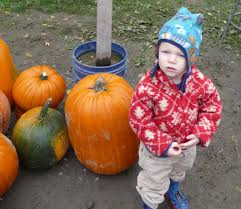 best pumpkin patches and corn mazes for seattle and eastside