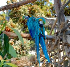 Zoo Lights Oakland Zoo by File Ara Ararauna Oakland Zoo California Usa 8a Jpg Wikimedia