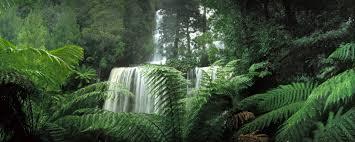 russell falls tas ken duncan galleries