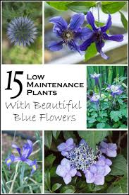 98 best blue flowers images on blue flowers monrovia