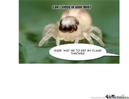 Spider Meme - cute spider by ella1912 meme center