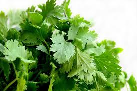 herbe cuisine images gratuites feuille fleur plat repas aliments vert