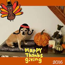 puppy thanksgiving epic blue acres photos facebook
